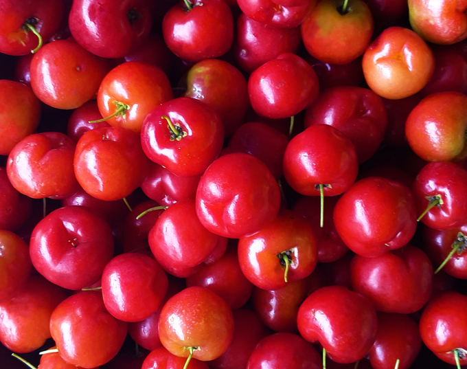 Acerola cherries / Barbados cherries / West Indian cherries / Wild Crepe Myrtle cherries / Malpighia Emarginata