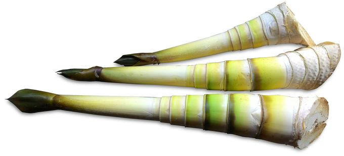 Unsheathed tender bamboo shoots.